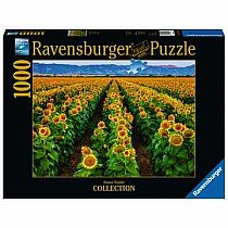 1000pc Fields of Gold Puzzle